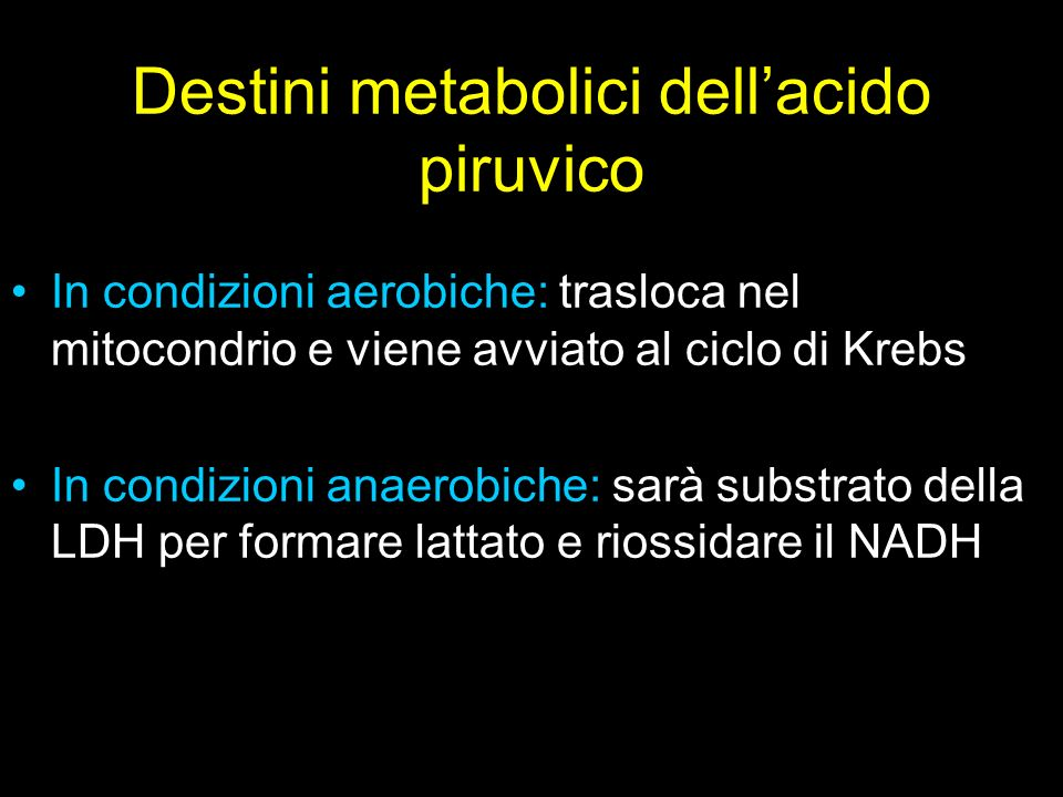 Destini metabolici dell'acido piruvico