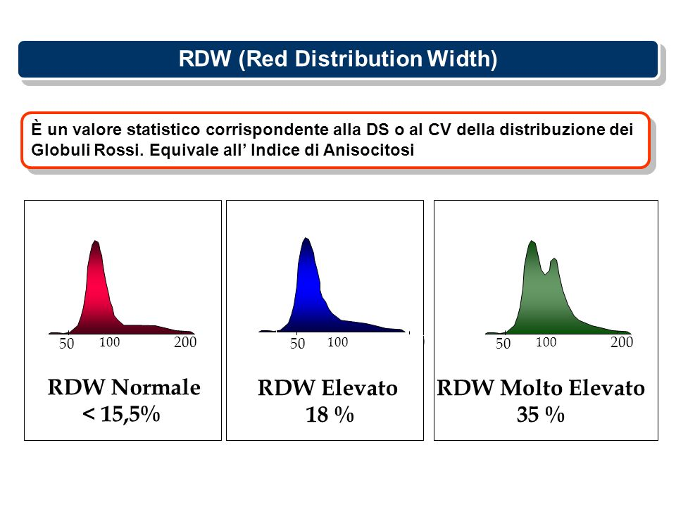 RDW (Red Distribution Width)