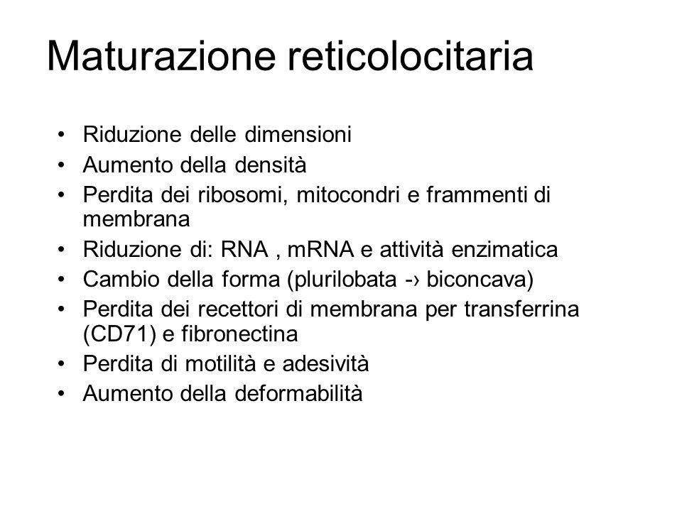 Maturazione reticolocitaria