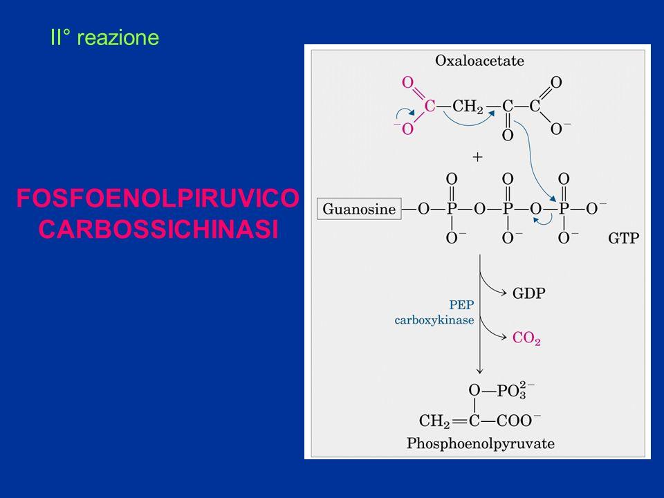 FOSFOENOLPIRUVICO CARBOSSICHINASI
