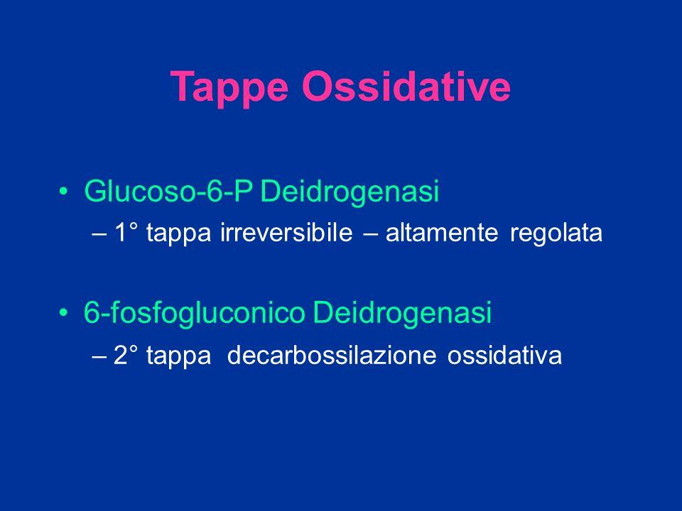Tappe Ossidative Glucoso-6-P Deidrogenasi