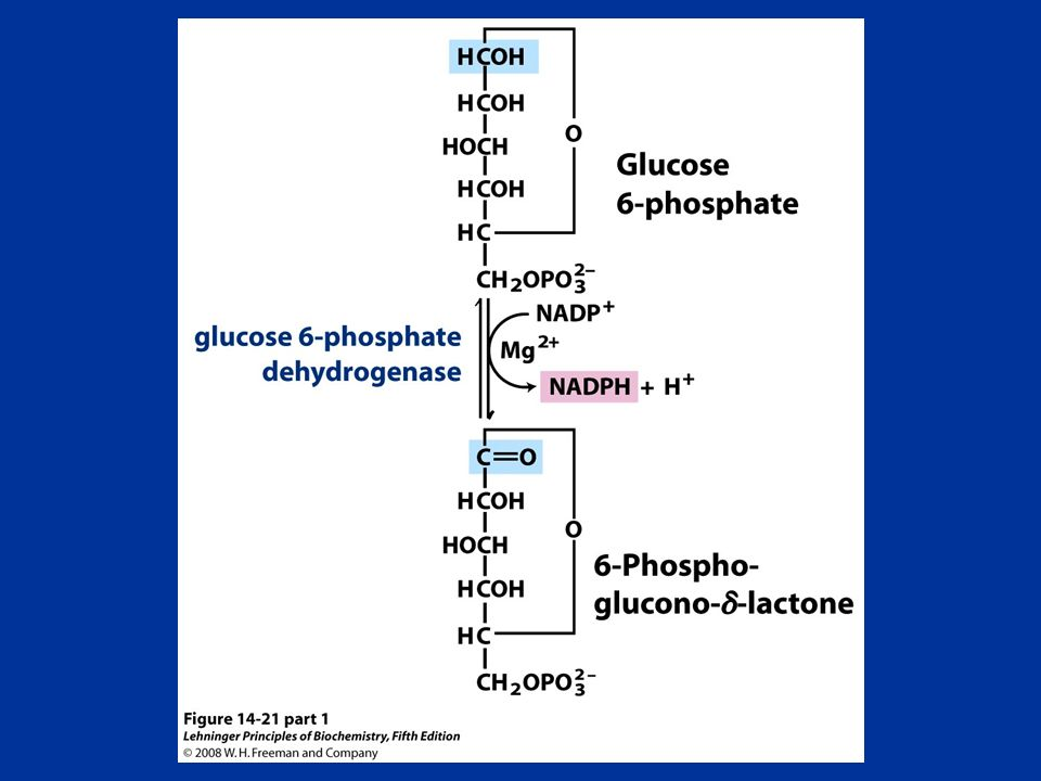 FIGURE (part 1) Oxidative reactions of the pentose phosphate pathway.