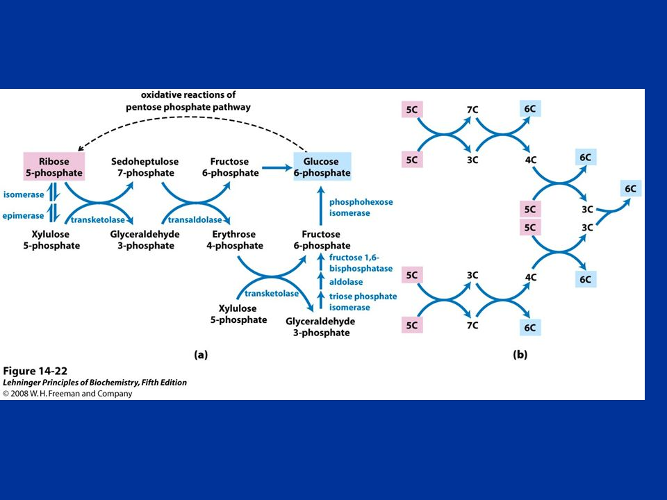 FIGURE Nonoxidative reactions of the pentose phosphate pathway
