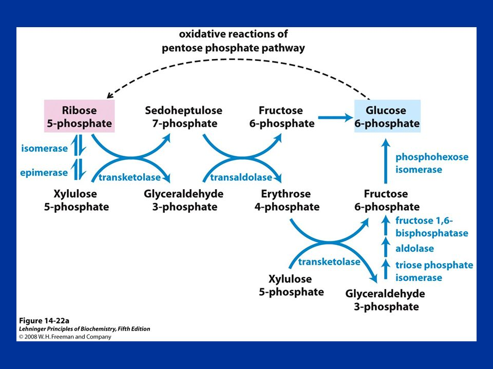 FIGURE 14-22a Nonoxidative reactions of the pentose phosphate pathway