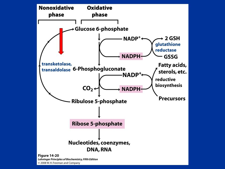 FIGURE General scheme of the pentose phosphate pathway