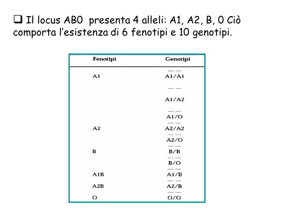 Il locus AB0 presenta 4 alleli: A1, A2, B, 0 Ciò comporta l'esistenza di 6 fenotipi e 10 genotipi.