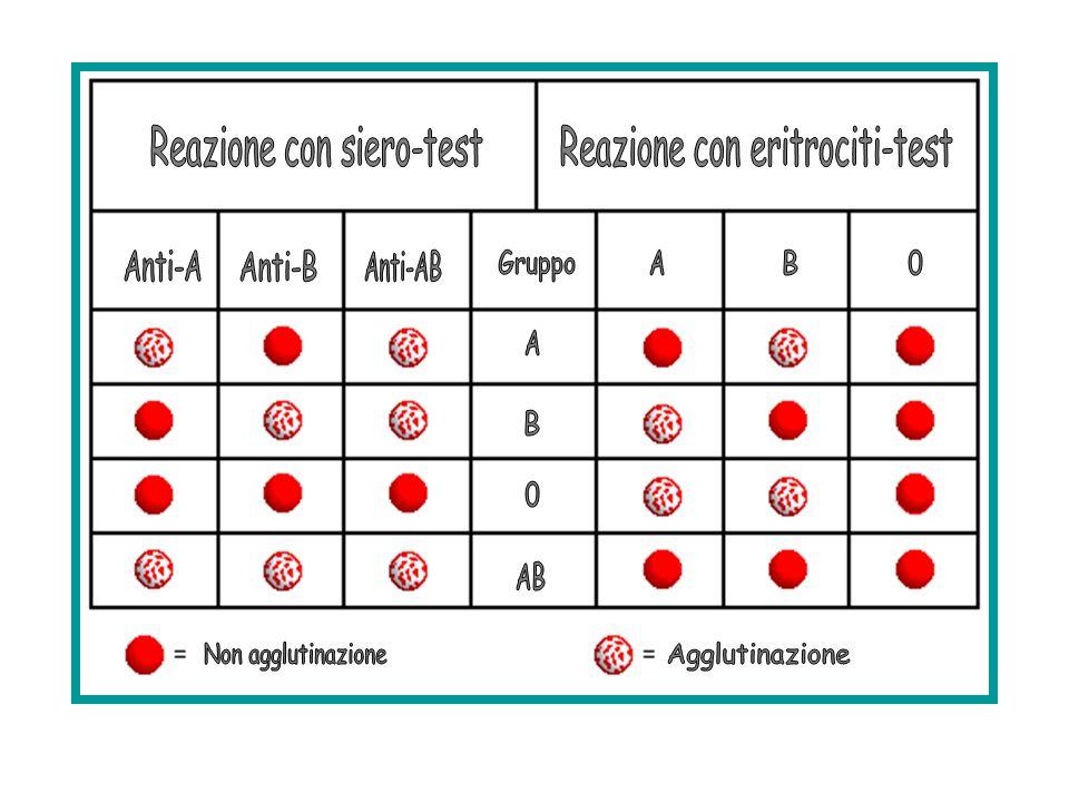 Reazione con siero-test Reazione con eritrociti-test