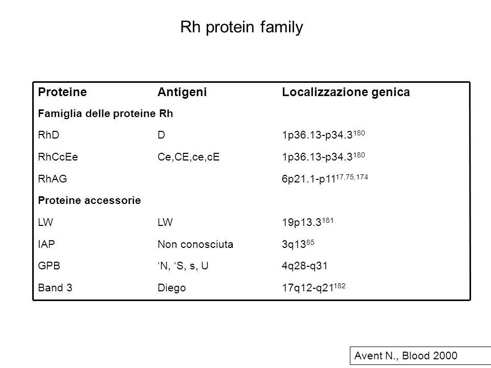Rh protein family Localizzazione genica Antigeni Proteine 17q12-q21182