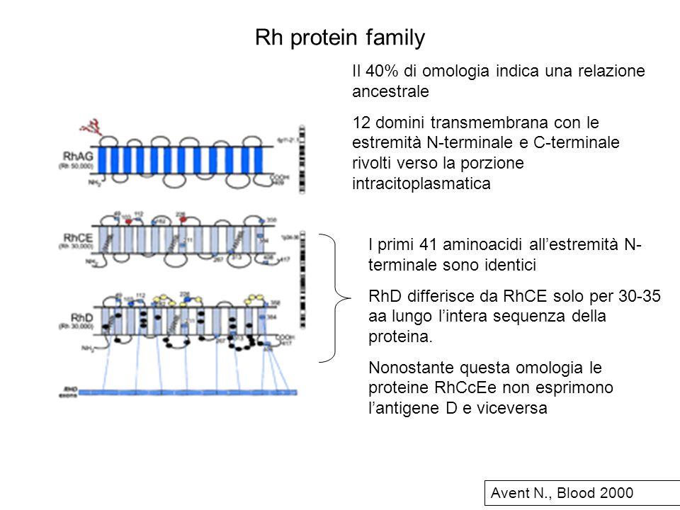 Rh protein family Il 40% di omologia indica una relazione ancestrale