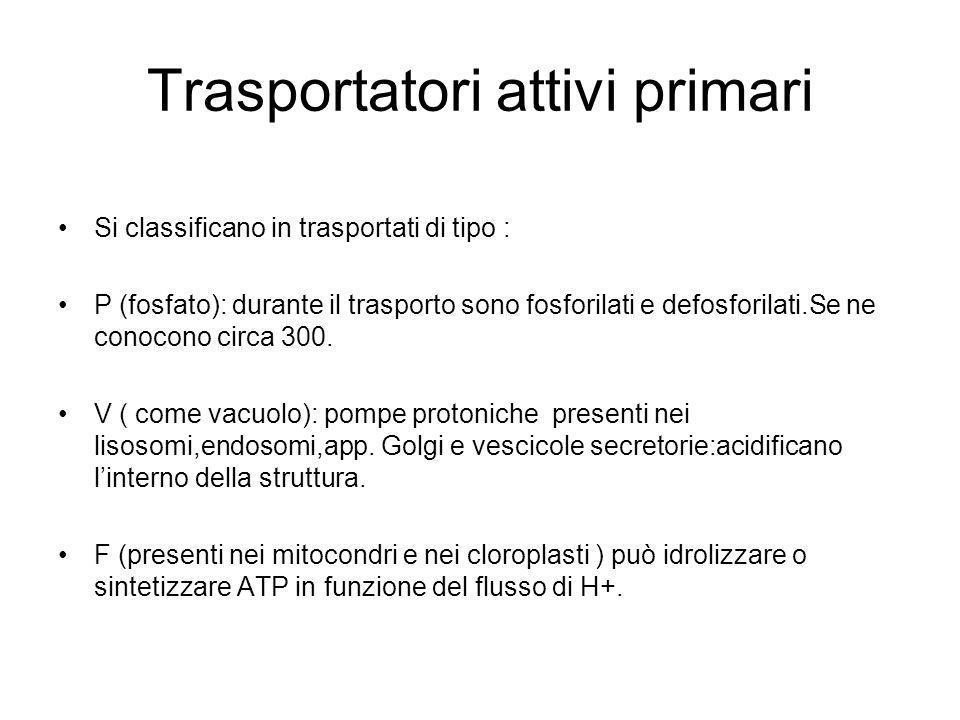 Trasportatori attivi primari