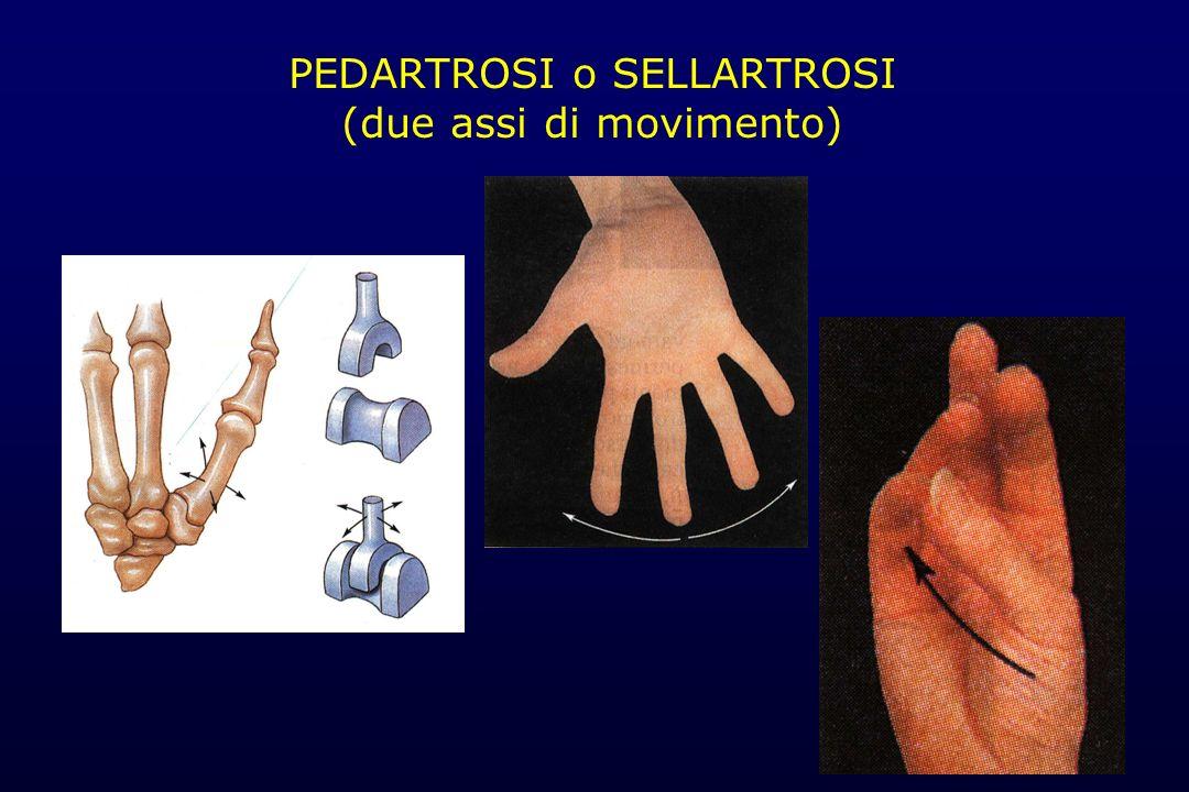 PEDARTROSI o SELLARTROSI (due assi di movimento)