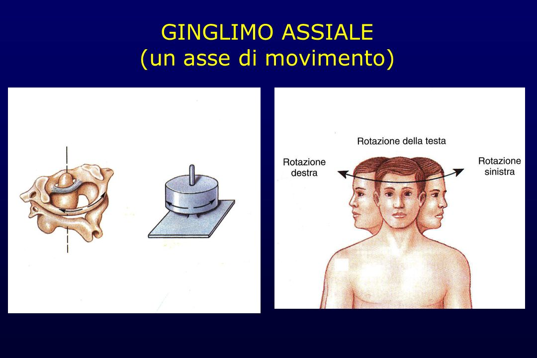 GINGLIMO ASSIALE (un asse di movimento)