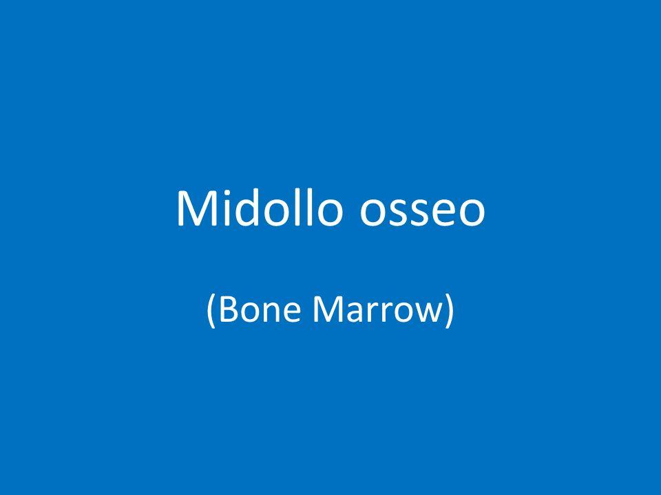 Midollo osseo (Bone Marrow)