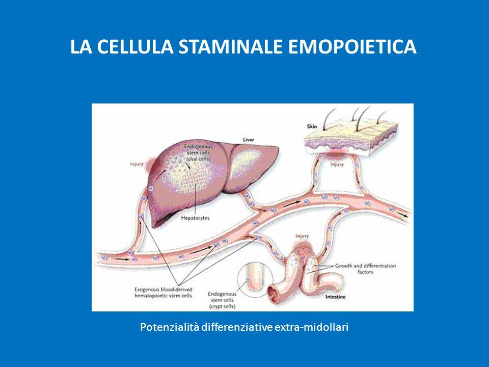 Potenzialità differenziative extra-midollari