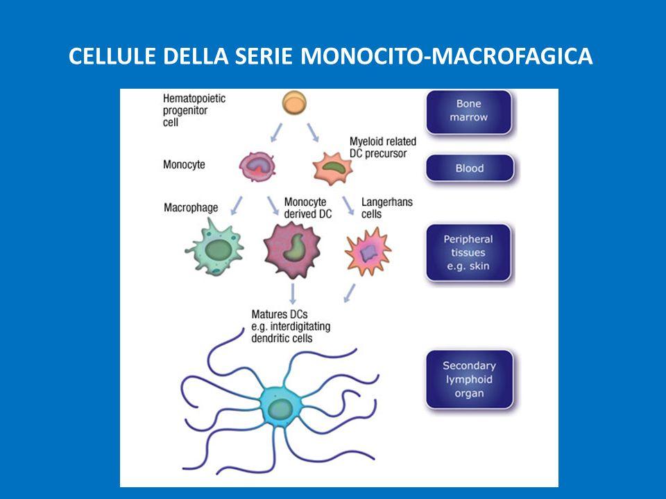 CELLULE DELLA SERIE MONOCITO-MACROFAGICA