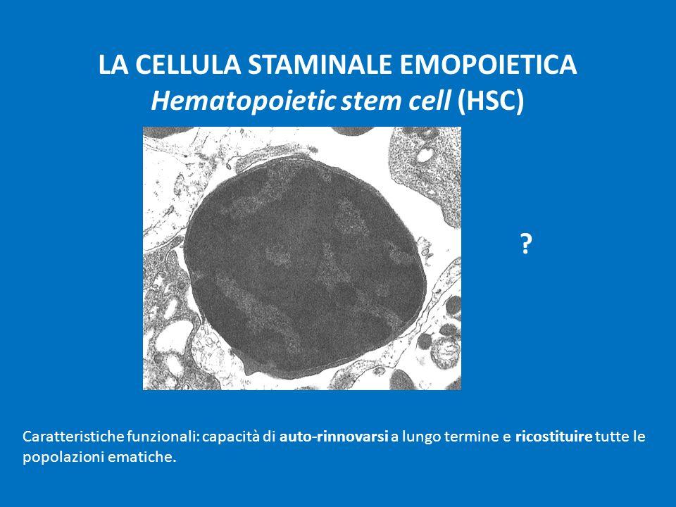 LA CELLULA STAMINALE EMOPOIETICA Hematopoietic stem cell (HSC)