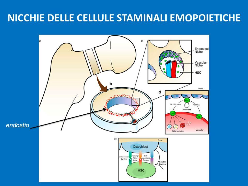 NICCHIE DELLE CELLULE STAMINALI EMOPOIETICHE