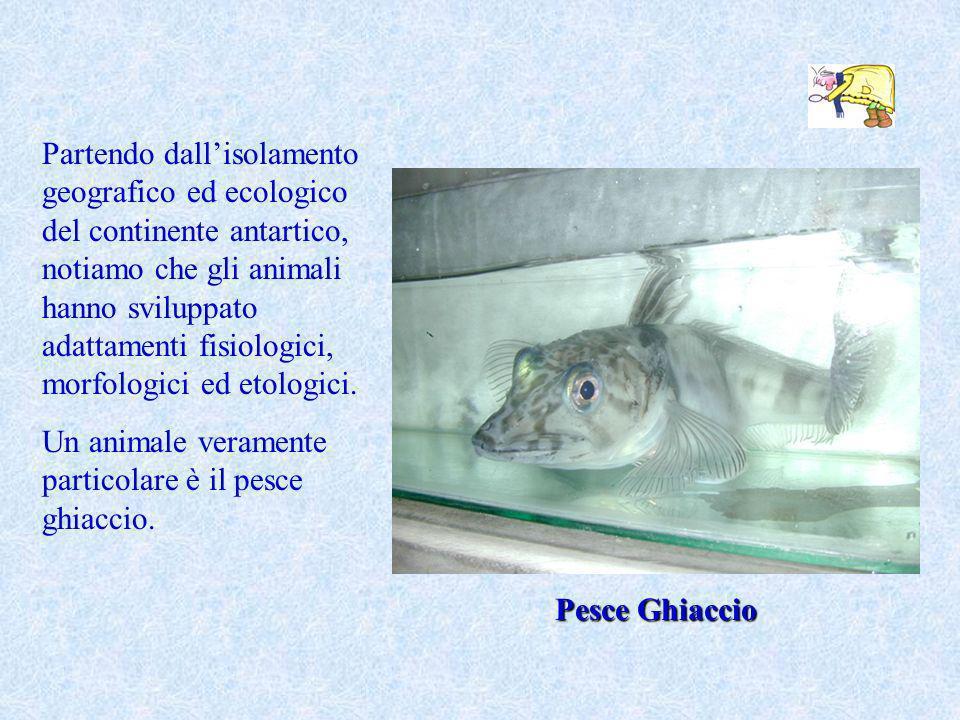 Partendo dall'isolamento geografico ed ecologico del continente antartico, notiamo che gli animali hanno sviluppato adattamenti fisiologici, morfologici ed etologici.