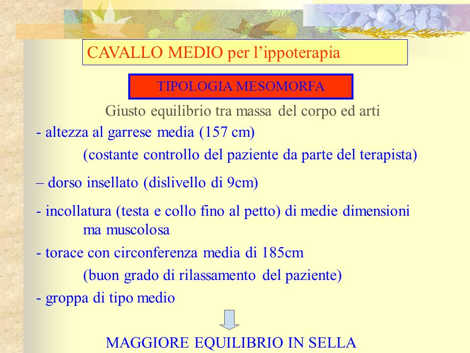 CAVALLO MEDIO per l'ippoterapia