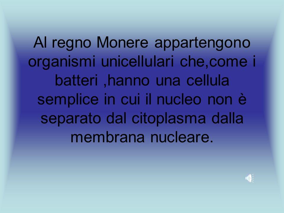 Al regno Monere appartengono organismi unicellulari che,come i batteri ,hanno una cellula semplice in cui il nucleo non è separato dal citoplasma dalla membrana nucleare.