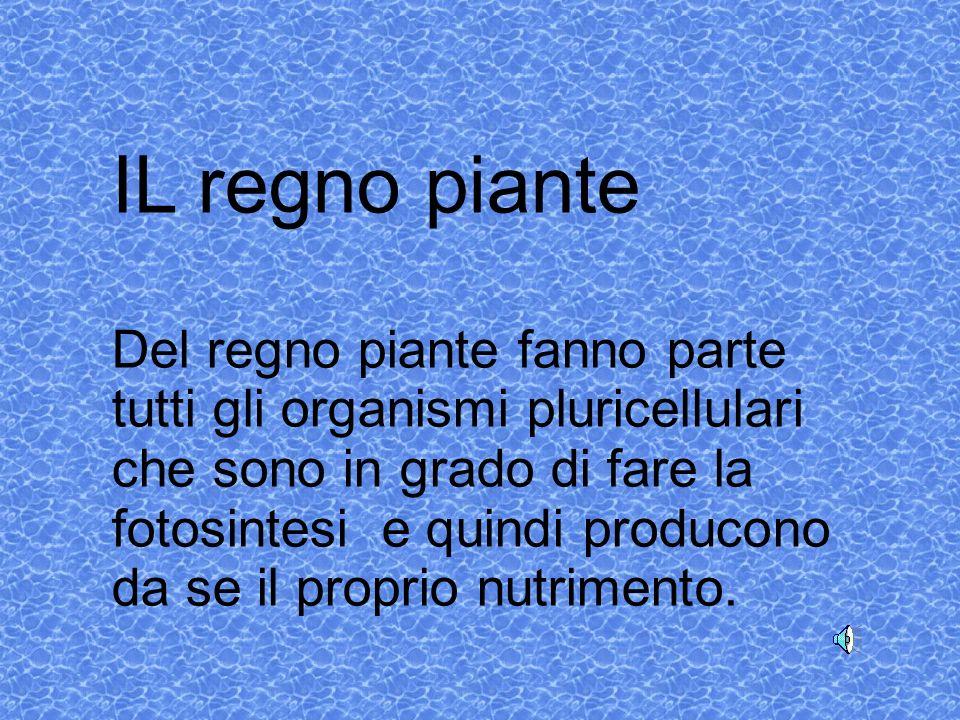 IL regno piante