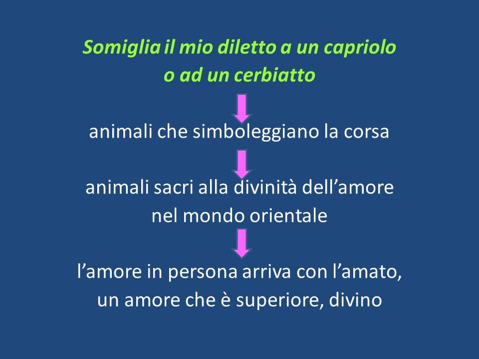 Somiglia il mio diletto a un capriolo o ad un cerbiatto animali che simboleggiano la corsa animali sacri alla divinità dell'amore nel mondo orientale l'amore in persona arriva con l'amato, un amore che è superiore, divino