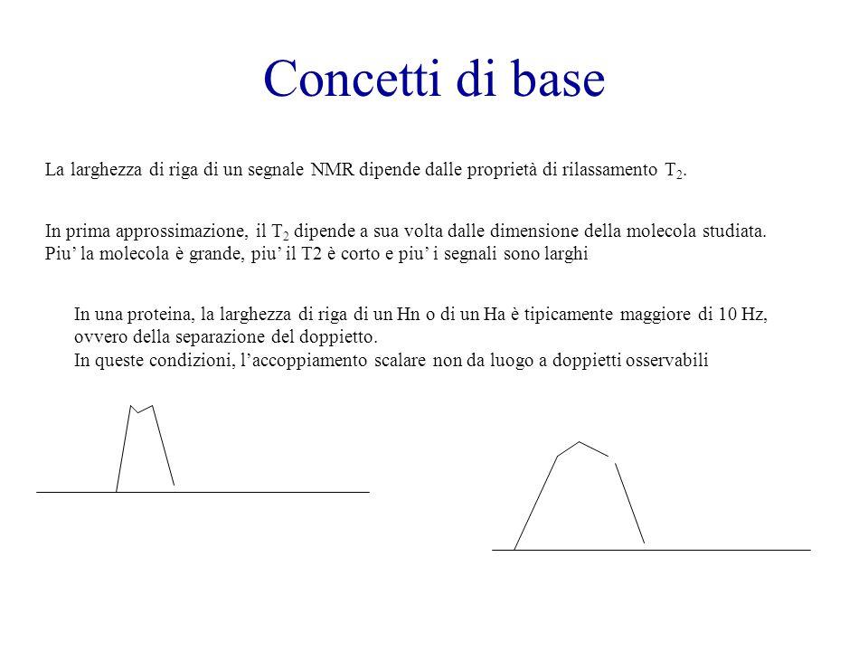 Concetti di base La larghezza di riga di un segnale NMR dipende dalle proprietà di rilassamento T2.