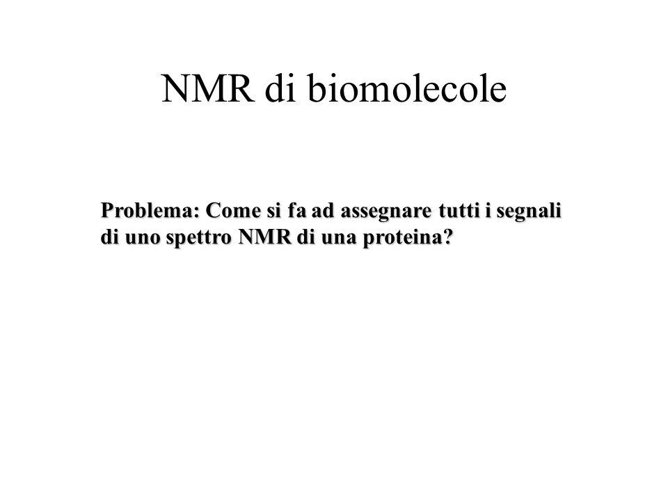 NMR di biomolecole Problema: Come si fa ad assegnare tutti i segnali di uno spettro NMR di una proteina