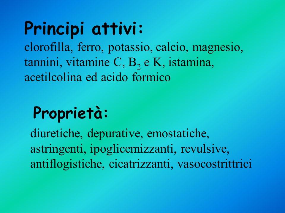 Principi attivi: clorofilla, ferro, potassio, calcio, magnesio, tannini, vitamine C, B2 e K, istamina, acetilcolina ed acido formico