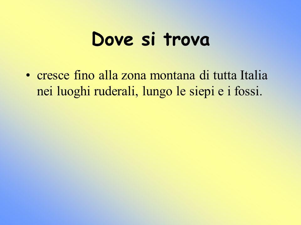 Dove si trova cresce fino alla zona montana di tutta Italia nei luoghi ruderali, lungo le siepi e i fossi.