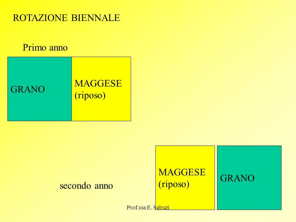 ROTAZIONE BIENNALE Primo anno MAGGESE GRANO (riposo) MAGGESE GRANO