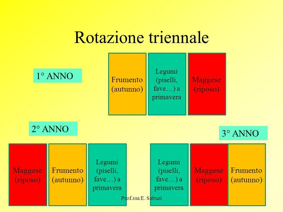 Rotazione triennale 1° ANNO 2° ANNO 3° ANNO Frumento (autunno)