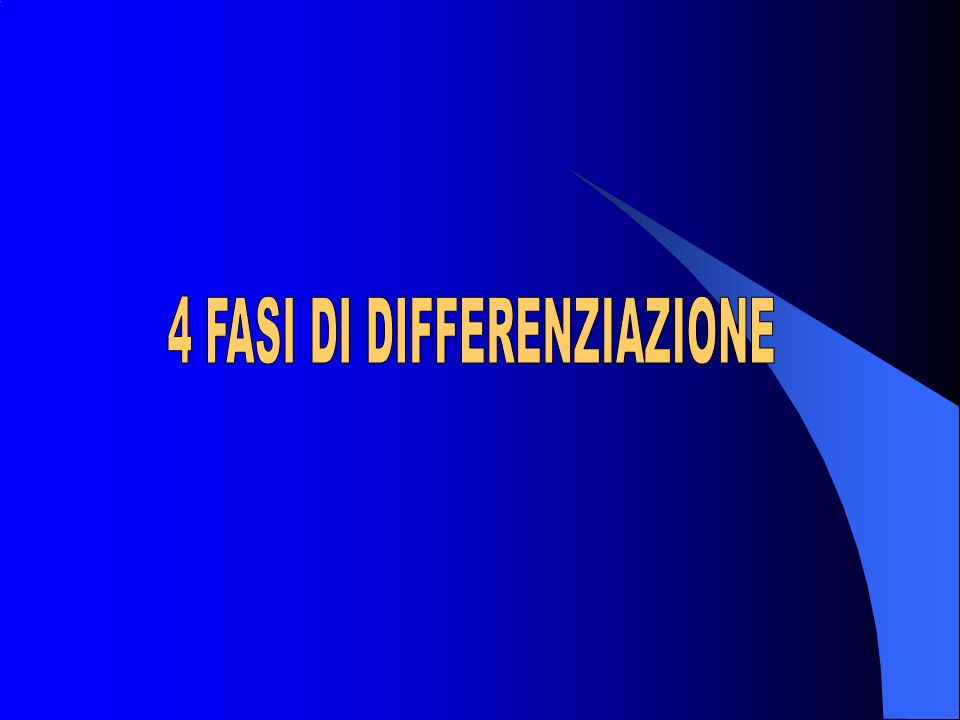 4 FASI DI DIFFERENZIAZIONE