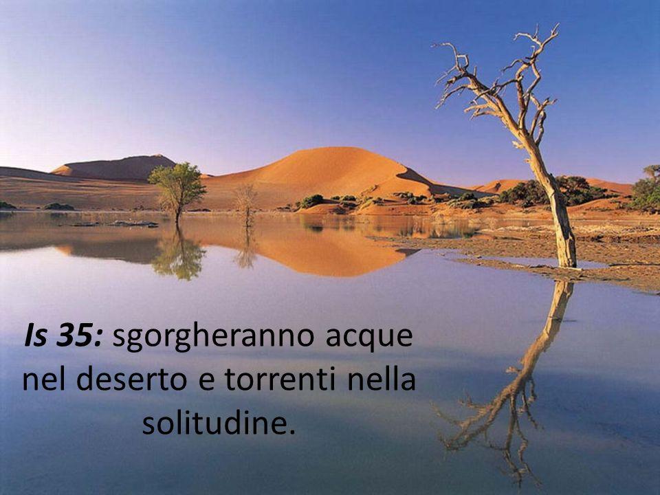 Is 35: sgorgheranno acque nel deserto e torrenti nella solitudine.
