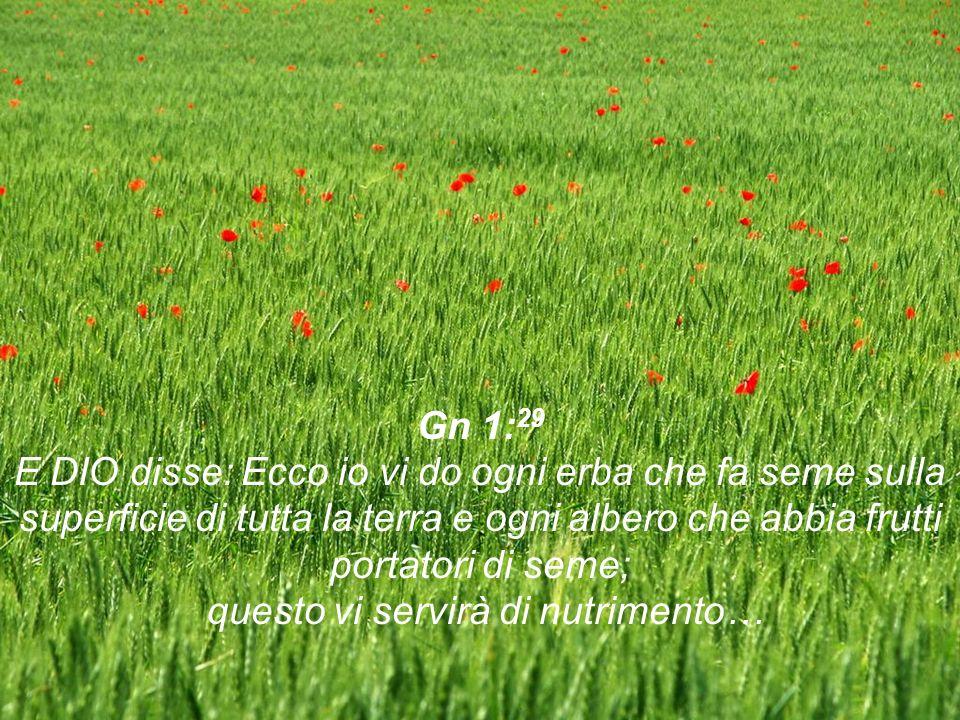 Gn 1:29 E DIO disse: Ecco io vi do ogni erba che fa seme sulla superficie di tutta la terra e ogni albero che abbia frutti portatori di seme; questo vi servirà di nutrimento…