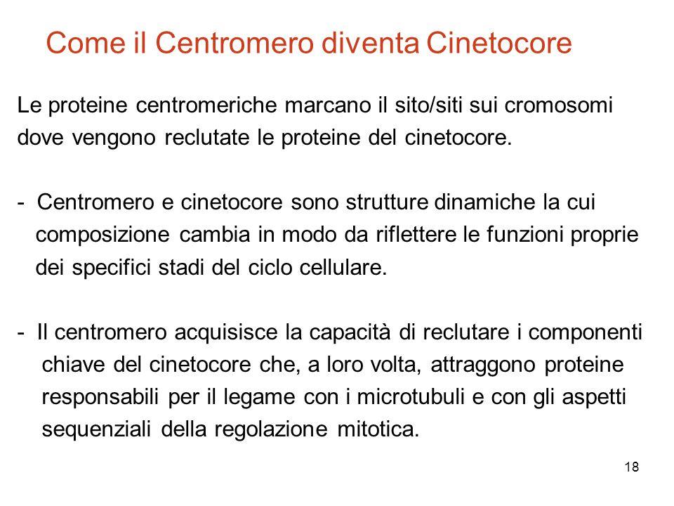 Come il Centromero diventa Cinetocore