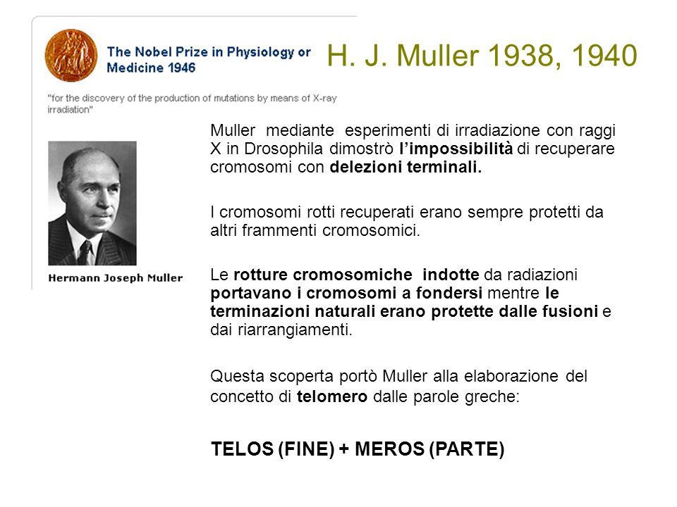 H. J. Muller 1938, 1940 TELOS (FINE) + MEROS (PARTE)