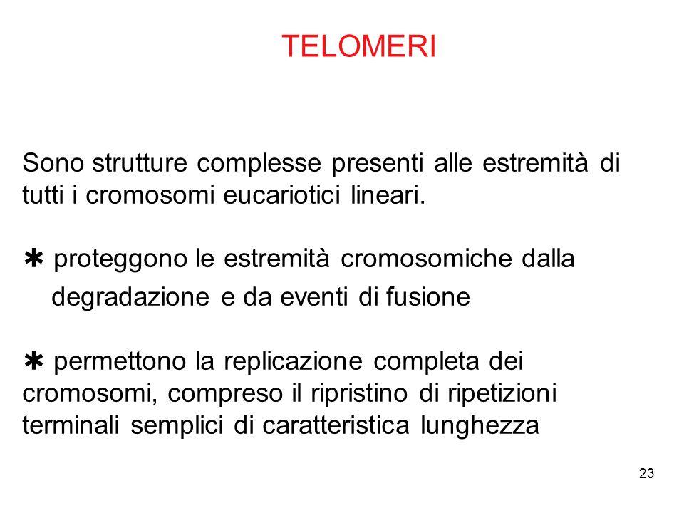 TELOMERI Sono strutture complesse presenti alle estremità di tutti i cromosomi eucariotici lineari.  proteggono le estremità cromosomiche dalla.