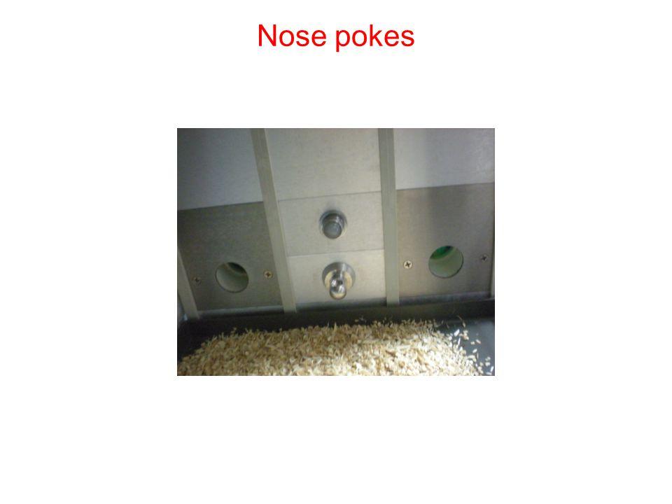 Nose pokes