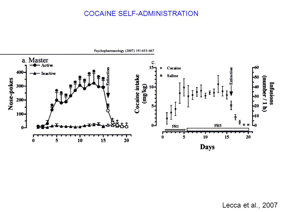 COCAINE SELF-ADMINISTRATION