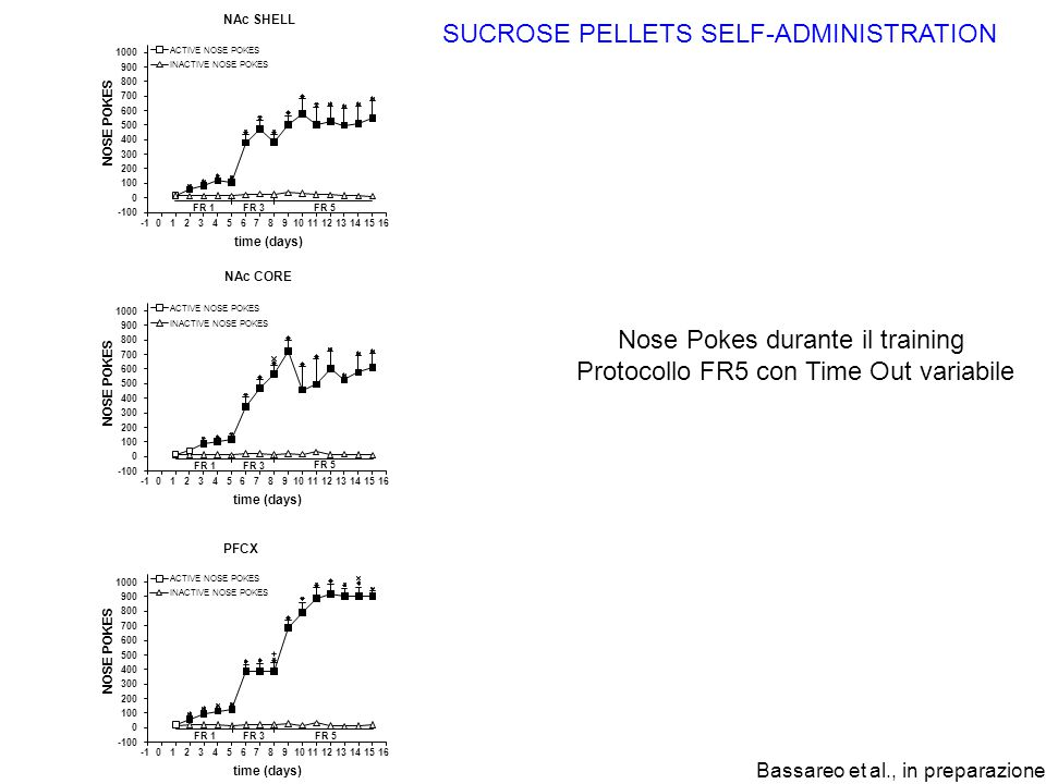 SUCROSE PELLETS SELF-ADMINISTRATION