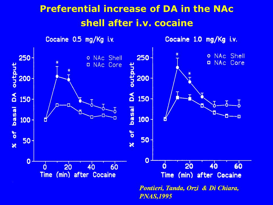 shell after i.v. cocaine Preferential increase of DA in the NAc