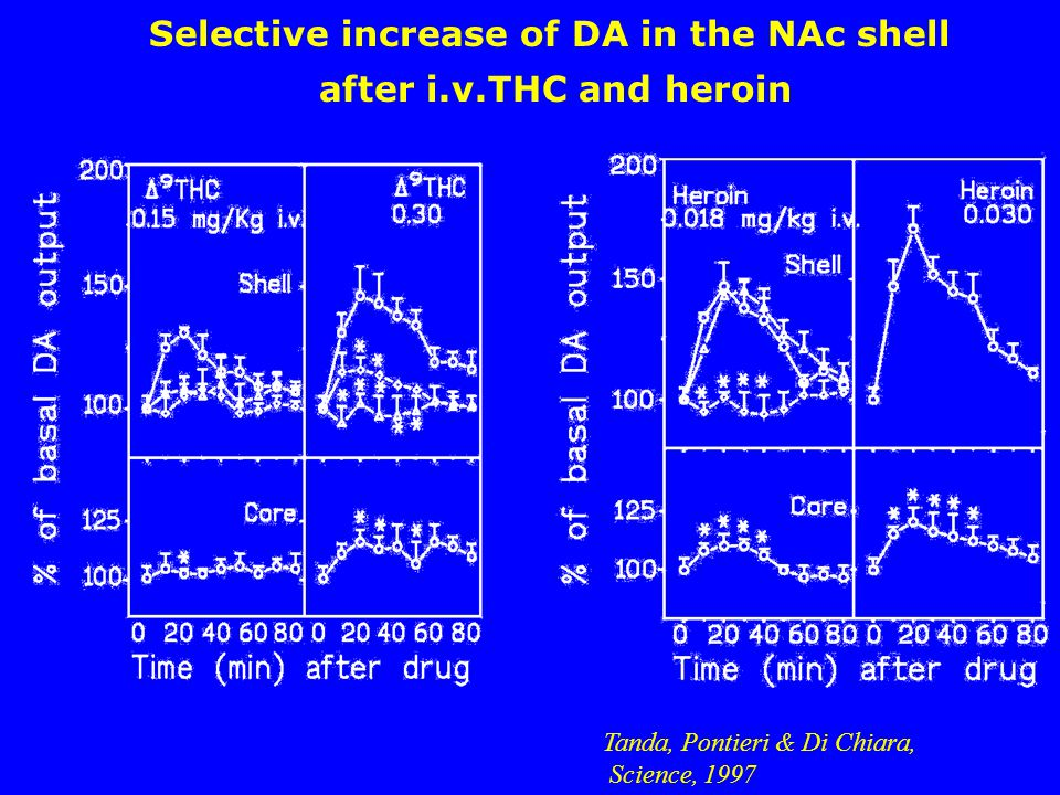 Selective increase of DA in the NAc shell after i.v.THC and heroin