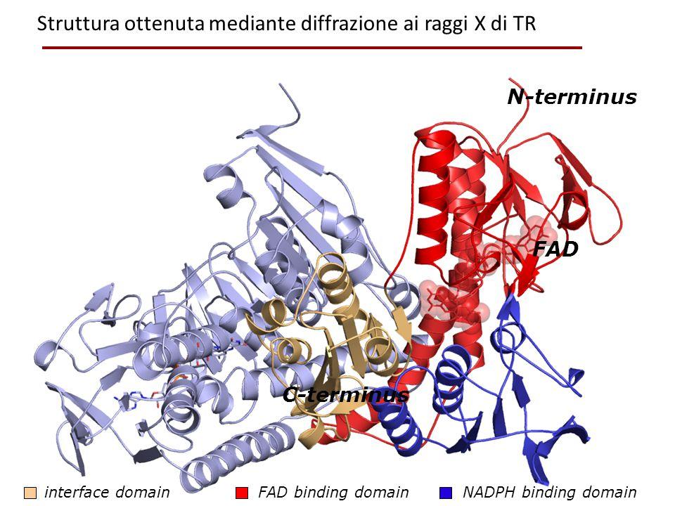 Struttura ottenuta mediante diffrazione ai raggi X di TR