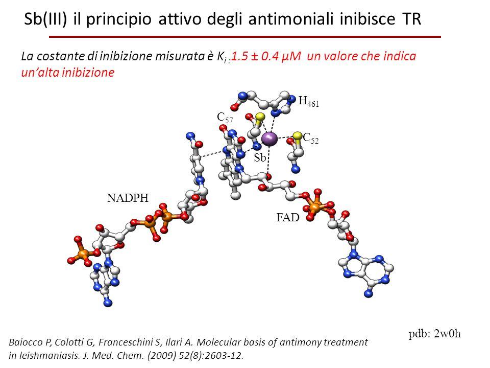 Sb(III) il principio attivo degli antimoniali inibisce TR