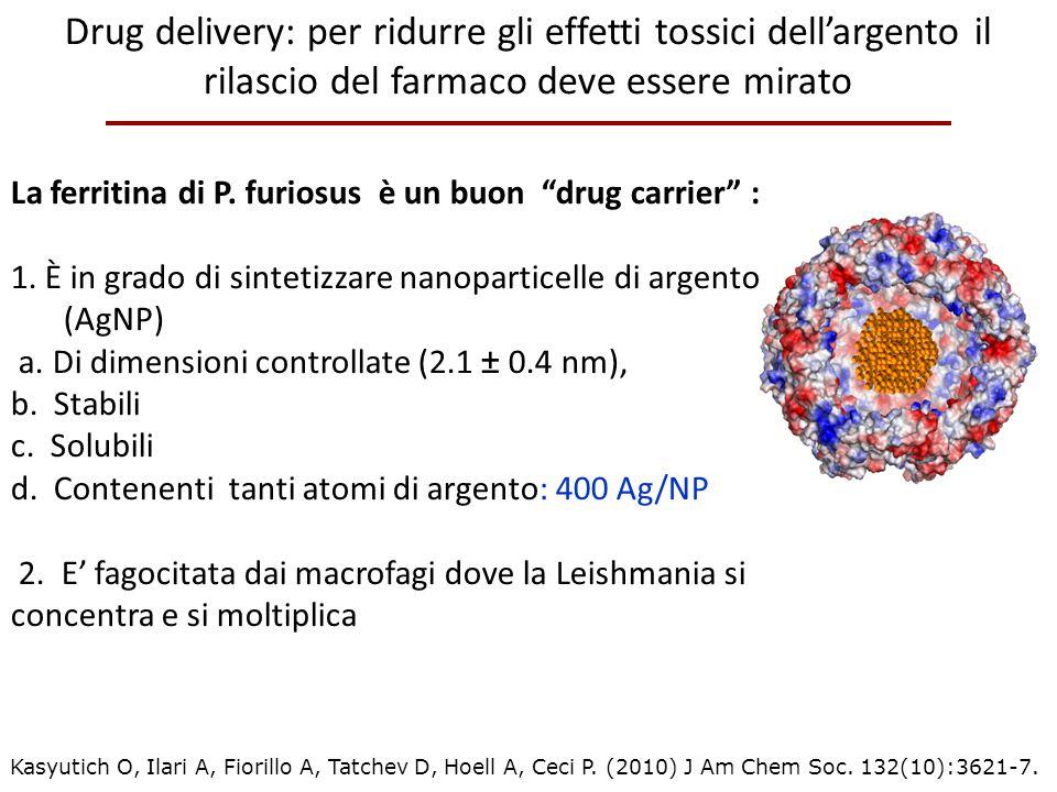Drug delivery: per ridurre gli effetti tossici dell'argento il rilascio del farmaco deve essere mirato
