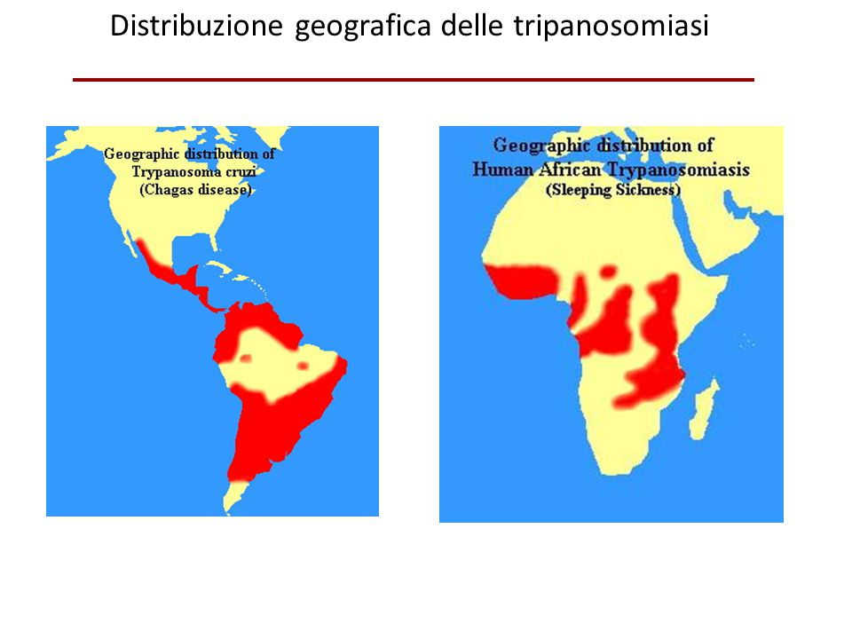 Distribuzione geografica delle tripanosomiasi