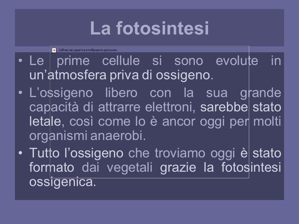 La fotosintesi Le prime cellule si sono evolute in un'atmosfera priva di ossigeno.