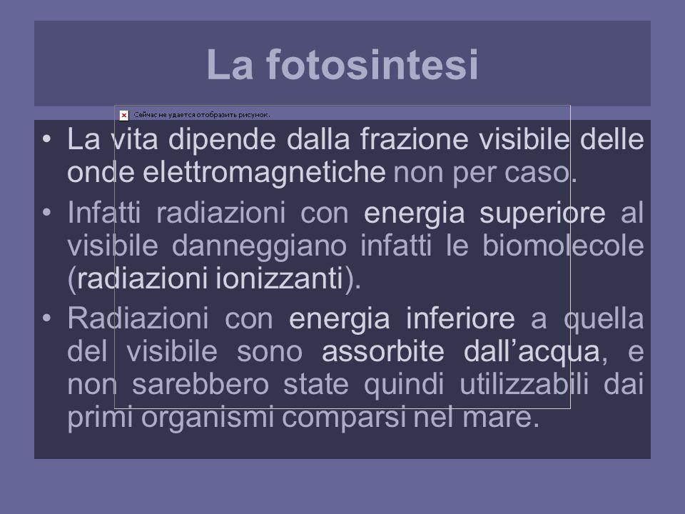 La fotosintesi La vita dipende dalla frazione visibile delle onde elettromagnetiche non per caso.