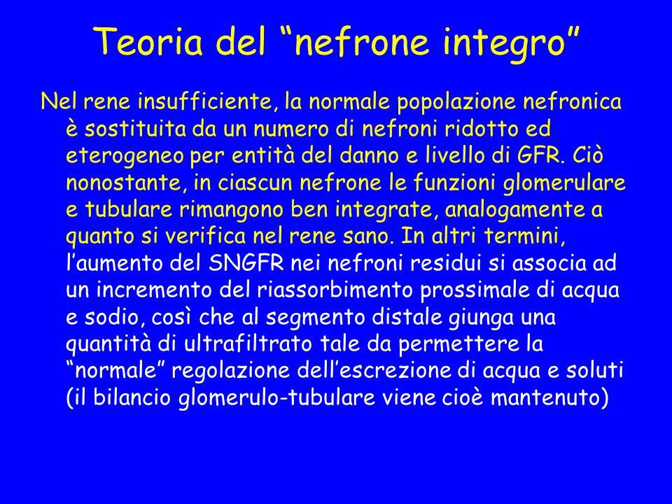 Teoria del nefrone integro